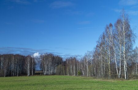 Birch grove at spring length of time at solar day on background blue sky
