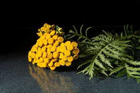 Tanacetum vulgare with flowering head and green sheet on table. Bright flower with reflection on black background