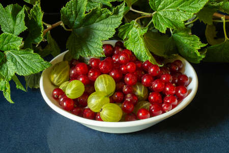 The Red currant with gooseberry in white plate on background green sheet. The Still life with berry on black. Ripe fruits at year term of time 版權商用圖片