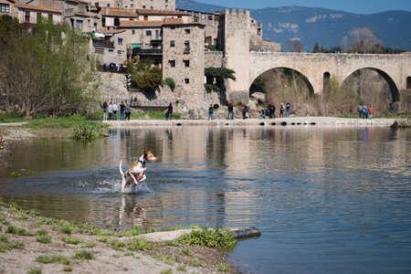 dog having fun splashing in the river wate