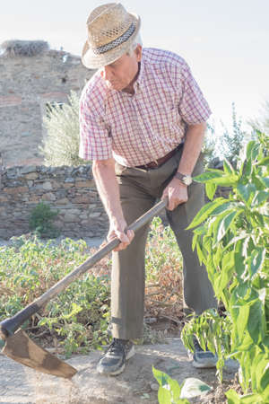 older man wearing a hat to protect himself from the sun digging in his village garden preparing the land for harvest with a traditional tool in his hands.