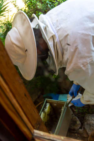 A beekeeper removing a swarm from a window 스톡 콘텐츠