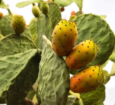Mediterranean fruits in Salento, Italy
