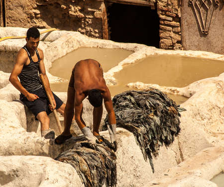 fes: People working in the famous complex tannery of Fez, Morocco