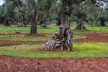 Mediterranean landscape in Salento, Italy