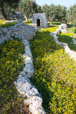 Mediterranean landscape in Salento with olive trees, stones and walls, Italy Stock Photo