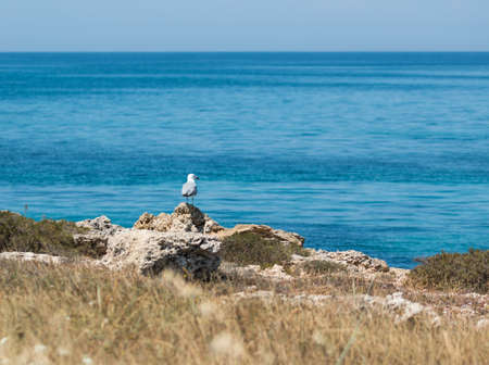 Seagull near mediterranean sea