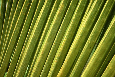The coconut leaves pattern. photo