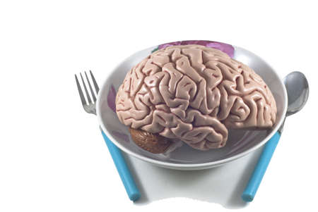 human brain as food with spoon and fork, isolated photo