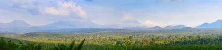 coffee harvest: coffee plantation on east Java, Indonesia