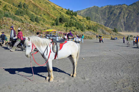 EAST JAVA,INDONESIA-OCT 14 :Horse for tourist rent at Mount Bromo volcanoes in Bromo Tengger Semeru National Park on October 14,2013 in East Java, Indonesia.