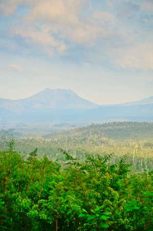 coffee plantation on east Java, Indonesia photo