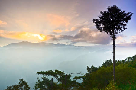 Mount Ali Sunrise with a tree and mountain,Alishan National Park,Taiwan photo
