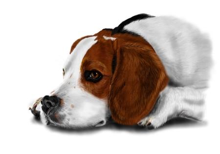 whelp: Illustration of beagle on white background  Stock Photo