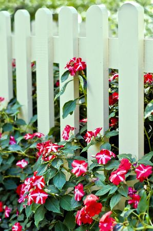 cottage fence: Image of white fence with flowers Stock Photo