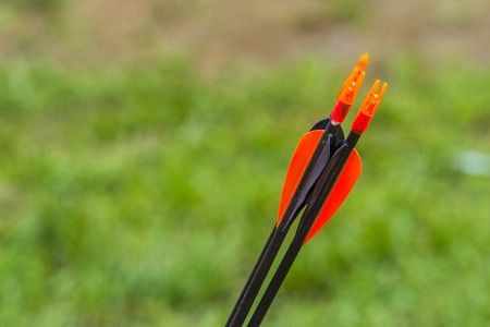 red plumage close up arrows for archery