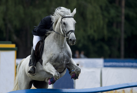Man riding horse jumping over hurdle on show jumping competition