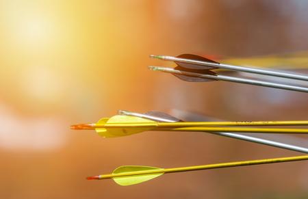 Archery arrows on a blur background. Sunny day