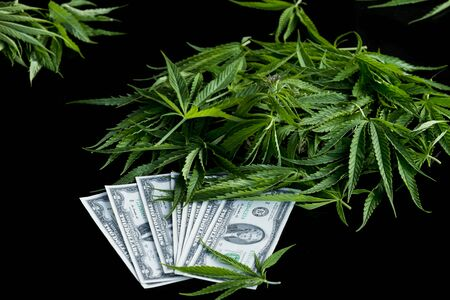 US dollars on the cannabis plant Banco de Imagens
