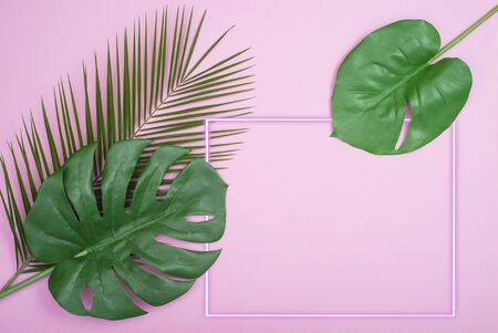 Green Palm Leaf and neon frame On Pink Background 스톡 콘텐츠