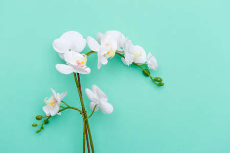 Close-up of white orchids on mint color background
