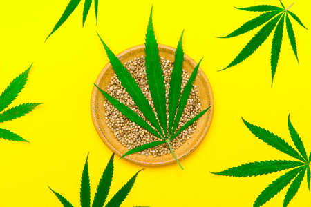 Green cannabis leaf and seeds on plate on yellow color background. Vegetarian healthy food 版權商用圖片