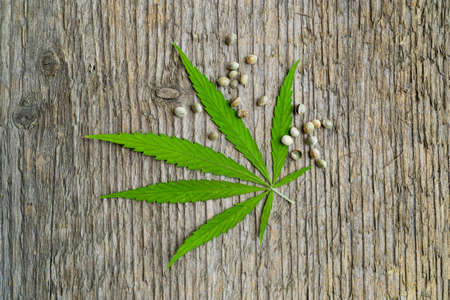 Green cannabis leaf and seeds on wooden background. Vegetarian food concept