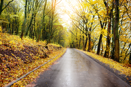 Colorful autumn landscape in the forest with old road Stock Photo