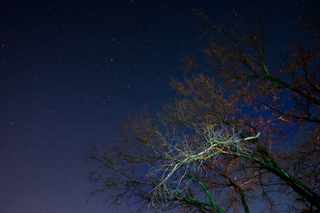 a beautiful night sky, the Milky Way and the trees Stock Photo
