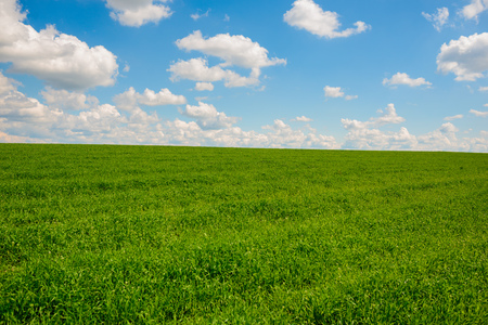 sward: Green grass and blue sky with white clouds,background