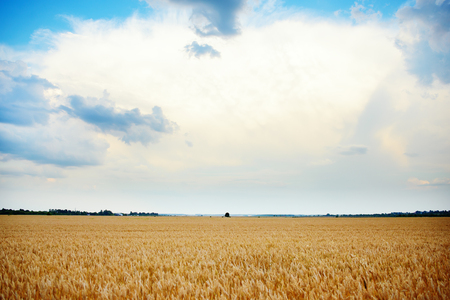 conceived: Empty countryside road through fields with whea. Conceived Stock Photo
