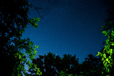 the pleiades: Blue dark night sky with many stars above field of trees. Milkyway cosmos background Stock Photo