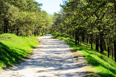 unsurfaced road: road through the forest in a delightful spring day Stock Photo