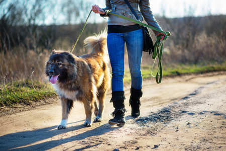 Caucasian shepherd dog outdoor exterior portrait a gorgeous spring day
