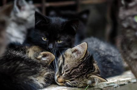 Small kittens resting outdoors a lovely sunny day Stock Photo