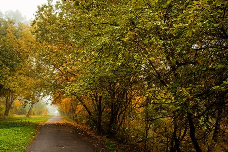 Road in autumn forest. Autumn landscape in perspective