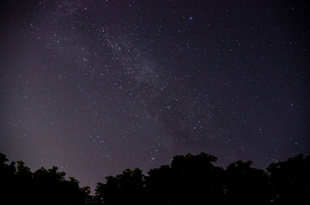 Starry sky and trees in the foreground. Reklamní fotografie
