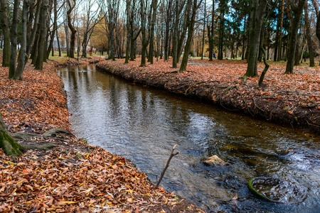 small river in autumn forest, many letters