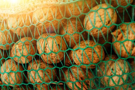 Background of bunch of unpeeled riped walnuts, collected into green wicker net bag. Stock Photo