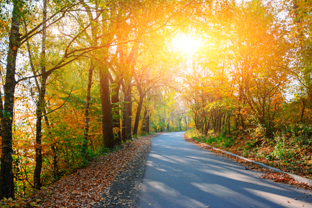 Bright and scenic landscape of new road across auttumn trees with fallen orange and yellow leaf. Banque d'images