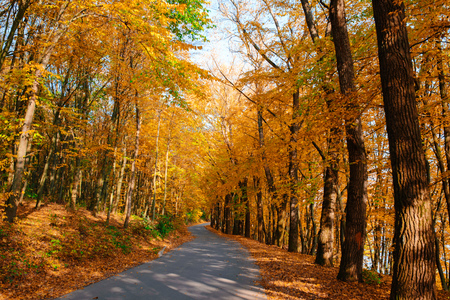 Bright and scenic landscape of new road across auttumn trees with fallen orange and yellow leaf. Stock Photo