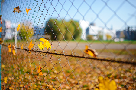 Metallic net-shaped fence from wire with autumn leaf stucked in it on a background of blur city.