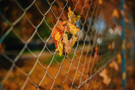Close up metallic net-shaped fence from wire with autumn leaf stucked in it on a background of blur city. Stock Photo