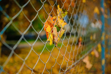 Close up of a metallic net-shaped fence from a wire with an autumn leaf stucked in it on a background of blur city