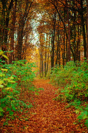 Bright and colorful landscape of autumn forest trail covered with leaf. Фото со стока