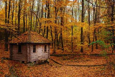 Remoted old wooden shack of ranger in autumn forest.
