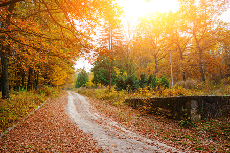 Bright and colorful landscape of sunny autumn forest with trail and stone bloc on the side of way. Stock Photo