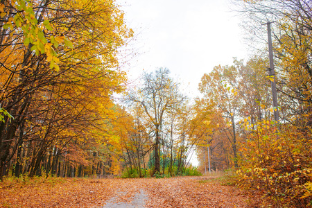 Bright and colorful landscape of sunny autumn forest with orange foliage and trail. Stock Photo