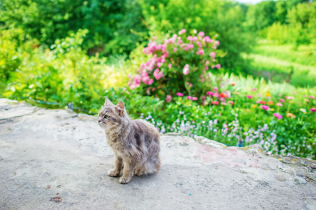 Gray short hair street cat lying in the shade of bushes. Фото со стока