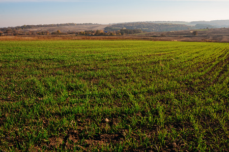 View on the farm cornfield with green grass and soil in countryside with autumn hills on background. Stock Photo